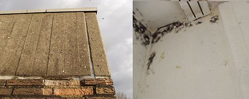 Moldy_Housecorner_both_Sides
