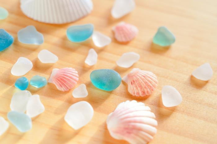 shell-3333017_1280